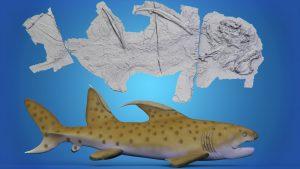 """Científicos revelan nuevos datos sobre fósil de tiburón """"Godzila"""" que vivió ha 300 millones de años"""