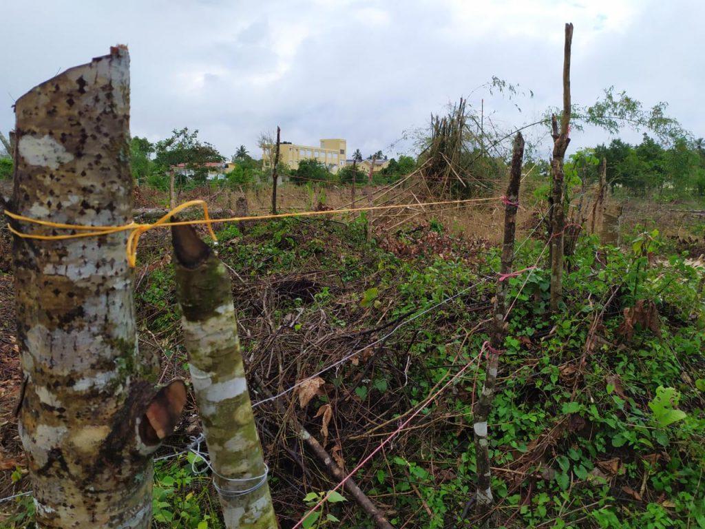 Terreno donde fueron cortados y quemados árboles en Sabana Grande de Boyà