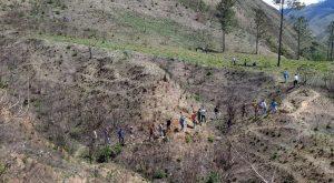 (VIDEO) Ríos y montañas del sur y la frontera son rescatada con amplio programa de reforestación a cargo de UTEPDA