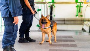 Emiratos usa perros como método rápido y no invasivo para detectar la Covid