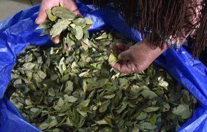 Encuentran dos laboratorios de cocaína en una reserva boliviana patrimonial
