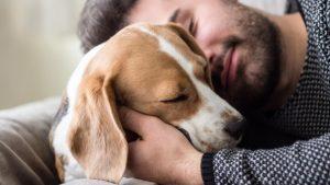Investigadores aseguran que una persona puede llegar a querer más a su mascota que a su pareja