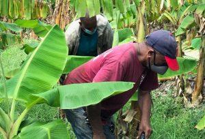 Consideran presidente Abinader debe preparar un plan de desarrollo agrícola
