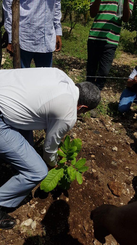 Lanzan programa de reforestación con plantas melíferas en la región Este