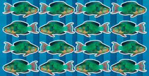 Pescadores del Este valoran medidas para protección del pez Loro y trabajadores del mar