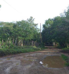 Productores mangos denuncian cosechas se pierden por malas condiciones carretera en Dajabón