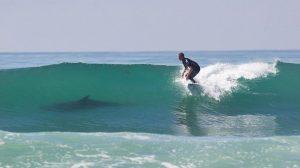 """Tiburones """"surfistas"""": no es por diversión, sino para ahorrar energía"""