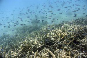 Australia impugnará que la Gran Barrera sea declarada patrimonio en peligro