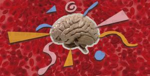 Descubren que una proteína presente en los glóbulos rojos ayuda a prevenir el envejecimiento del cerebro