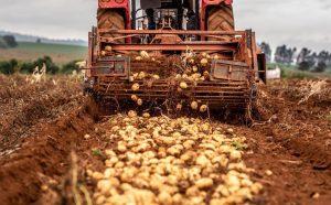 Brasil aumenta 8 % los créditos a la agricultura para el período 2021-2022