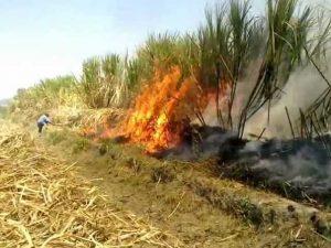 NASA investigará efectos en la salud de la quema de caña de azúcar en Florida