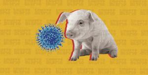 """Autoridades prohíben """"comer carne de cerdo en Elías Piña"""" por circulación """"cepa viral"""" procedente de Haití"""