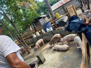 Funcionario de Ganadería recomienda consumir carne de cerdo; alega no representa peligro para la salud