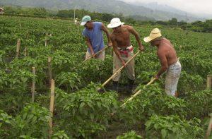 América destaca su posición unida sobre futuro de la producción de alimentos