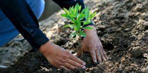 Anuncian jornada de reforestación en Monte Plata