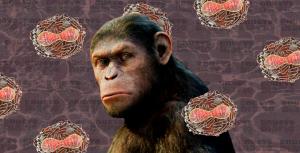 ¿Qué es realmente la viruela del simio? La enfermedad que podría haber llegado a RD