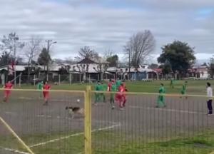 (VIDEO) Un perro se mete a partido de fútbol y anota un gol con su espalda