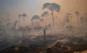 Ecologistas atacan proyecto económico que sacrifica medioambiente en Brasil