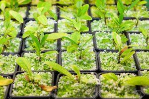 Los cultivos de coca de Perú rozan su récord histórico con 61.777 hectáreas