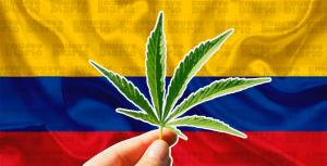 """""""MalaYerba"""": ¿Y si el cannabis se legalizara en Colombia?"""