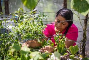 Finaliza proyecto de la UE que benefició a más de 15.000 familias en Honduras